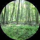 关于三醋酸纤维「Soalon™」为了森林保护的原料调配方针。